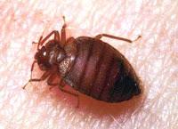 bed bugs bite back. Black Bedroom Furniture Sets. Home Design Ideas