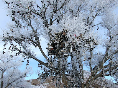 nevada02 Nevada Shoe Tree
