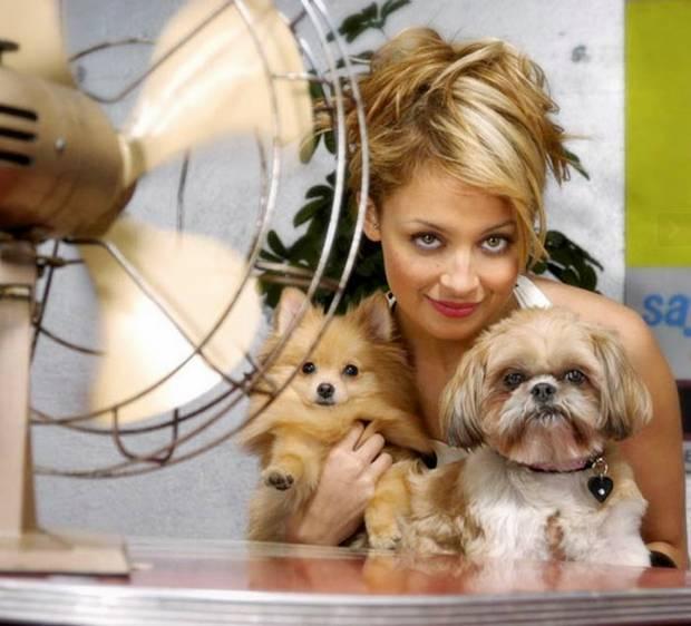 Nicole Richie S Dog Honey
