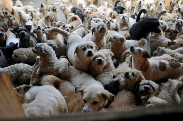 How 1500 Dogs and 200 Cats Love Together - Amazing Pictures