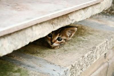 http://4.bp.blogspot.com/_iTuR32yCX8E/SQn2ZF3wnDI/AAAAAAAAAms/yHs-80Fjjy4/s400/hiding+kitten+2.jpg
