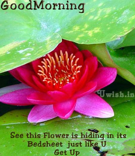 See this Flower is hiding in its Bedsheet, just like you. Get up. Good Morning wish for you.