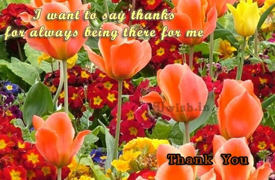 I want to say thanks for always being there for me. Thankyou wishes and greetings with beautiful orange flowers.