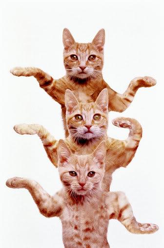 [Image: cat_egyptian.jpg]