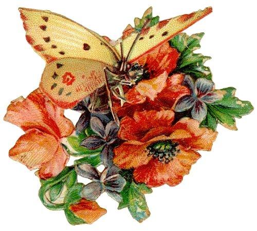 http://4.bp.blogspot.com/_iYaPYoZOdes/SR9-g_MPZEI/AAAAAAAABxs/YOufeBIBDkg/s1600/Borboleta+Vitor+1.jpg
