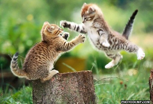 [flying-cat-fight.jpg]