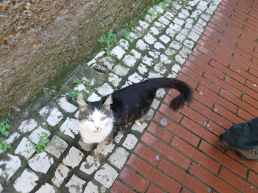 il gatto narciso
