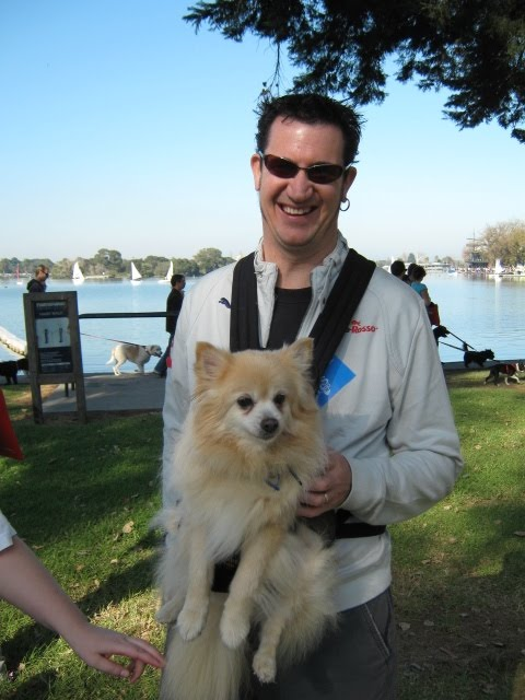 "This proud Pomeranian-dad special ordered his custom ""Outward Hound"" doggie"
