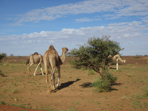 Ordinary Eau De Libourne En 4 Lettres #3: Mauritanie063_1_1.JPG