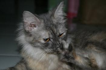 si luna kucing kesayangan gue