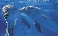 golfinhos nadando