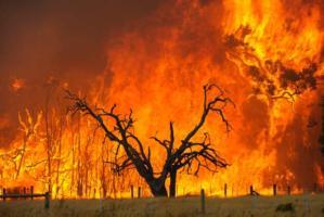 [bushfire]