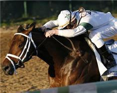 Travers Stakes 2010, Horse Racing