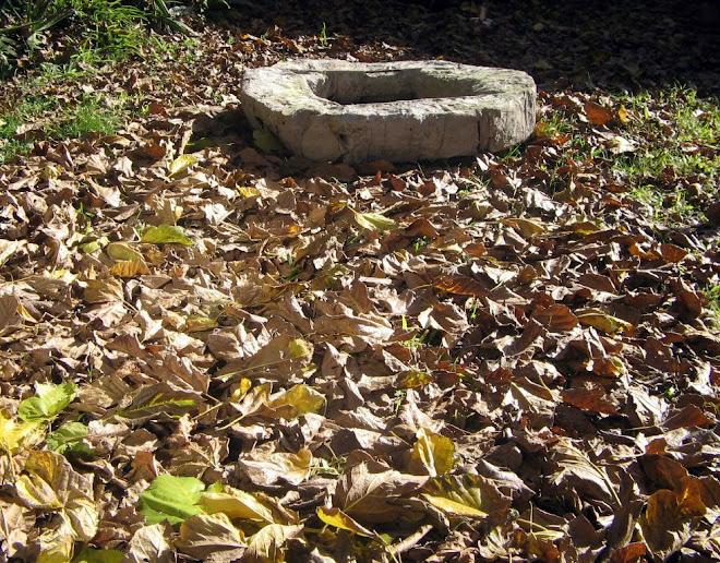 aro en otoño