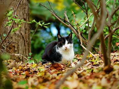 wallpaper cute cat. Black and white cats wallpaper
