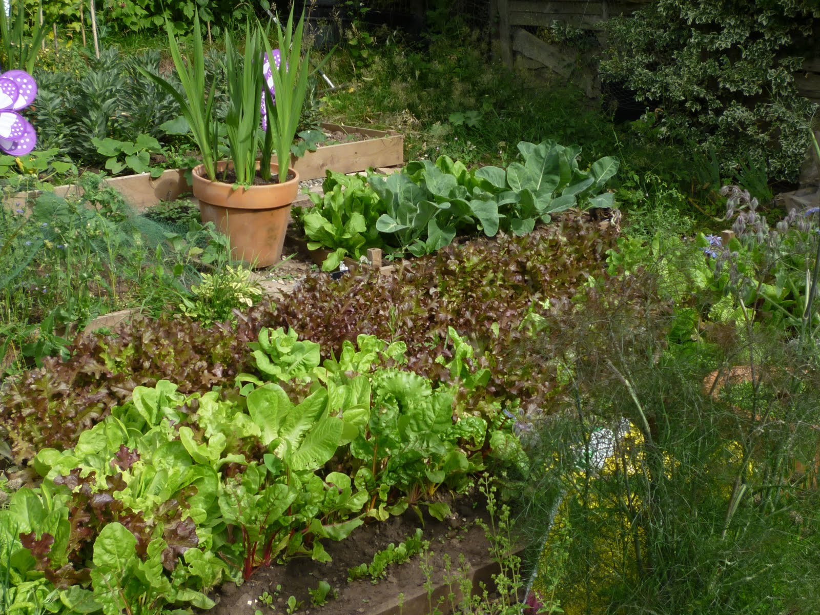 This could be ludlow or anywhere the vegetable patch for Vegetable patch