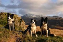 Briar, Cahal and Tife