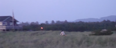 spooky bicycle at night, tall grass and twilight