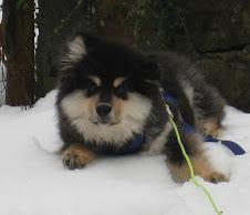 Marco i snøen. Januar 08.