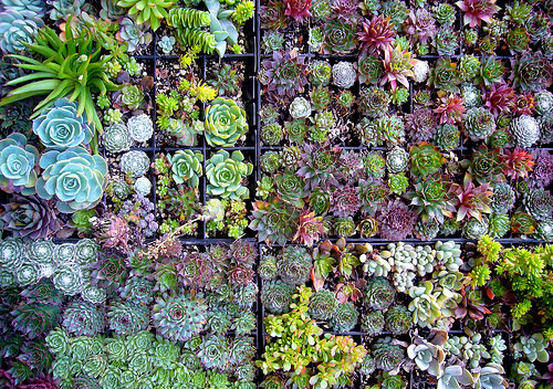 Indoor succulent garden design your revolution for Garden design using succulents