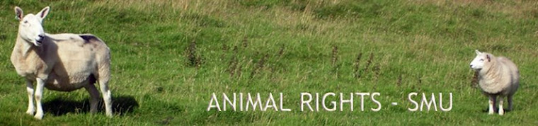Animal Rights SMU