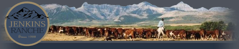 Jenkins Ranche