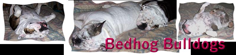 BedHog Bulldogs