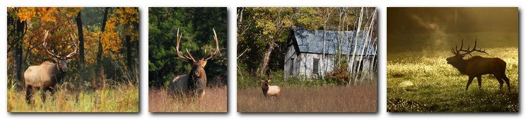 Arkansas Wildlife Photography