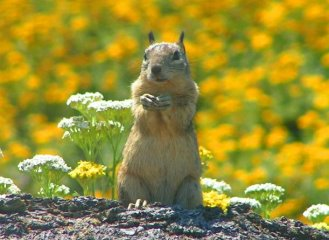 Monterey Squirrel August 2007