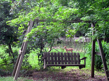 Single fawn, June 13, 2009