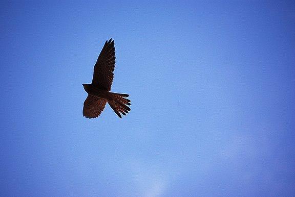 сокол позняки киев falcon kiev