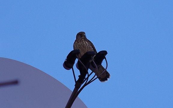 сокол спутниковая антенна falcon satellite antenna