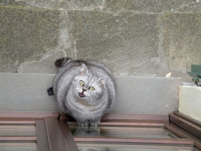 Epic Fail Fat Cat Epic Fail Fat Cat Epic Fail
