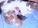 C.C.'s last litter of babies born 20 September 2006