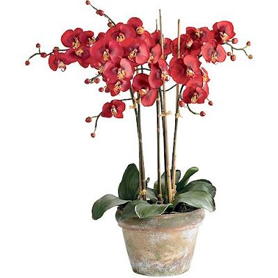 Орхидеи в дома