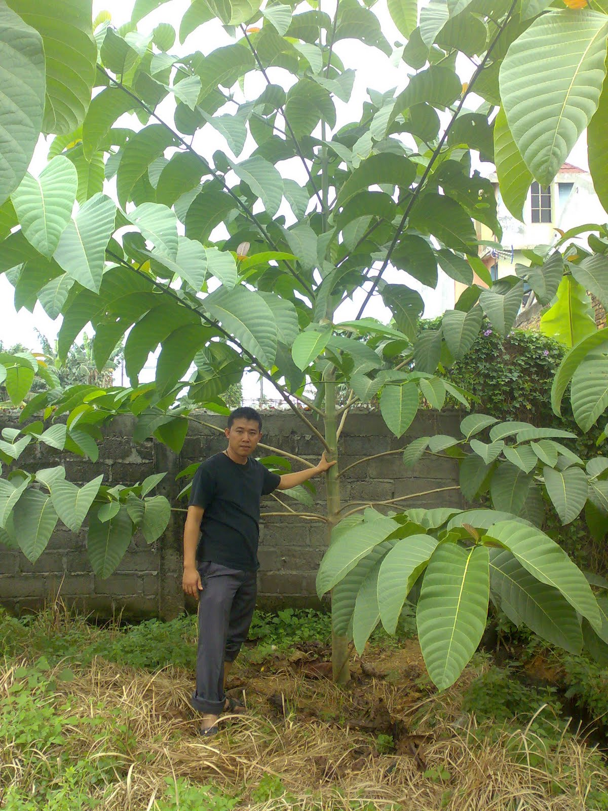 Jabon Sumatera