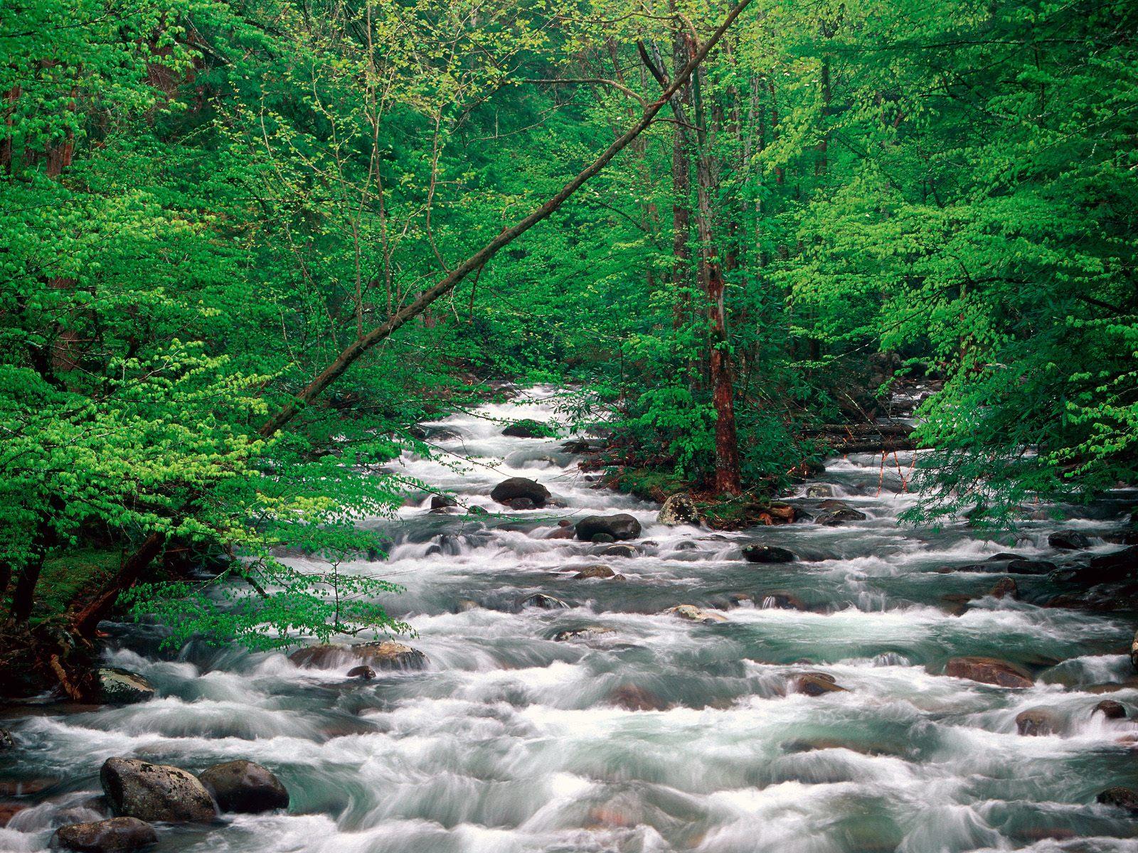 http://4.bp.blogspot.com/_ioD6UOQqcyA/Sw73c7M8_OI/AAAAAAAABdQ/rDzbd_F3Fvc/s1600/Little+Pigeon+River,+Great+Smoky+Mountains,+Tennessee.jpg