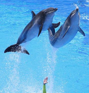 Hong Kong Dolphins 2007