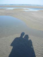 ジェリコアコアラ砂浜