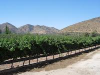 サンタ・リタののブドウ畑