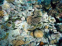 Coral Reef Destruction Worldwide | RM.