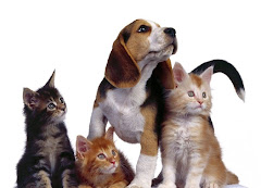 Gatos y perros perdidos aquí