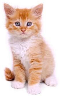 Kucing Tingkatkan Resiko Kanker Otak