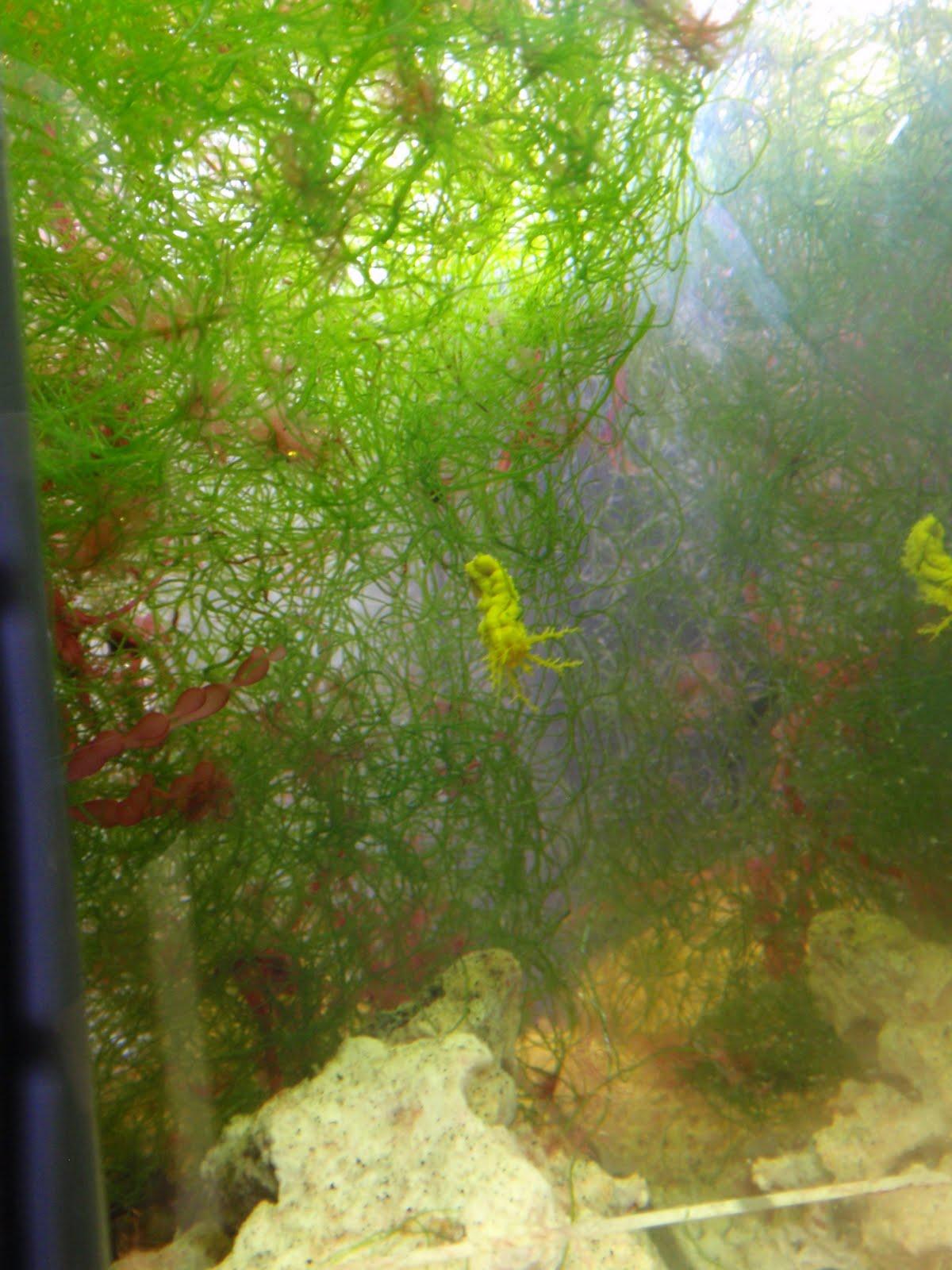Trials and Tribulations of a Reef Aquarium August 2010