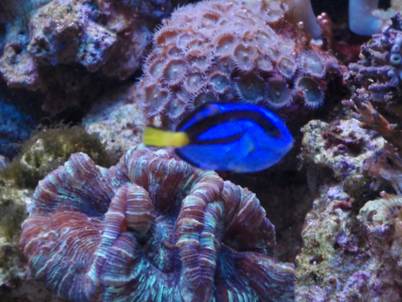 Trials And Tribulations Of A Reef Aquarium Help Sick