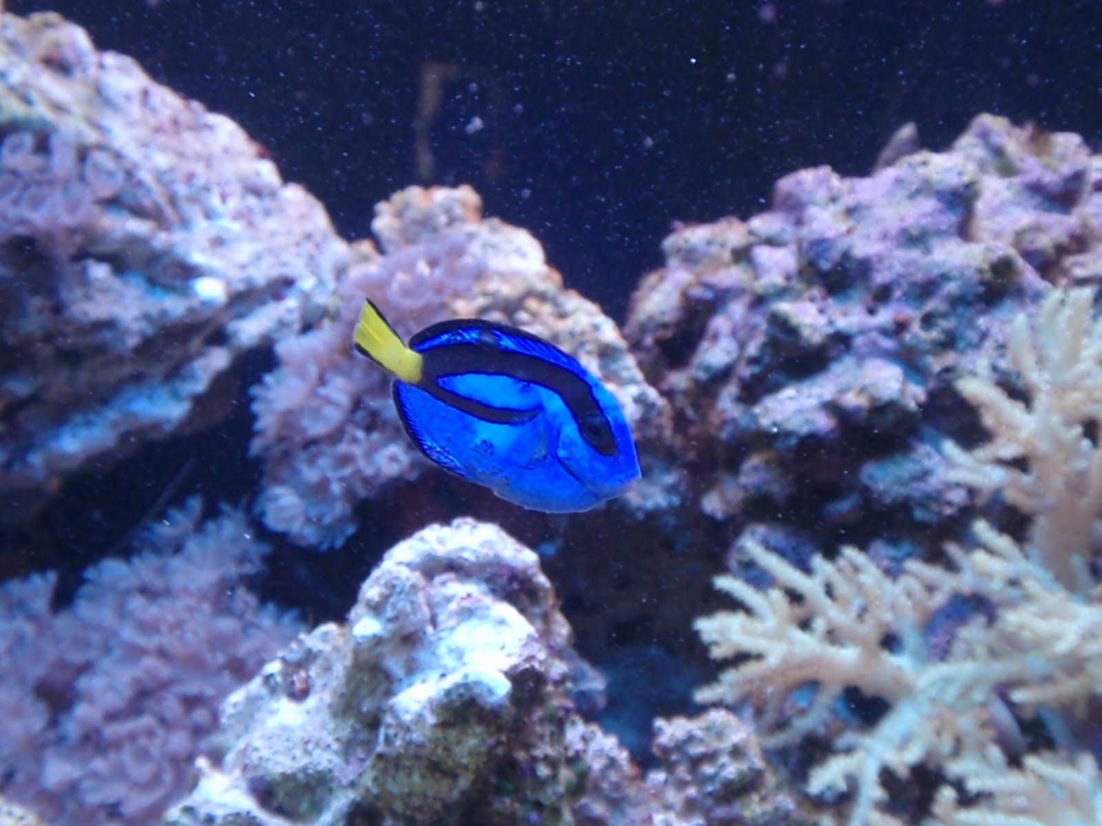 Trials and Tribulations of a Reef Aquarium 2010