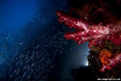 coral reef at archipelago raja ampat 2