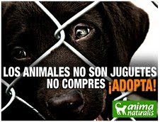 No compres un animal, adoptá