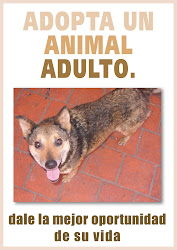 ADOPCION DE ANIMALES ADULTOS