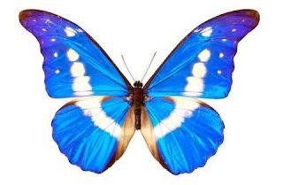 borboleta butterfly mariposa